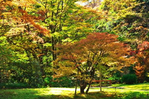 日光 田母沢御用邸記念公園の庭園1_a0263109_15383905.jpg