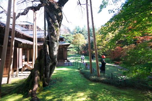 日光 田母沢御用邸記念公園の庭園1_a0263109_15383955.jpg