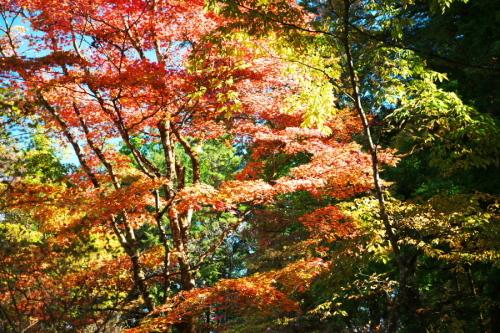 日光 田母沢御用邸記念公園の庭園1_a0263109_15390901.jpg
