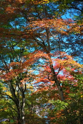 日光 田母沢御用邸記念公園の庭園1_a0263109_15390929.jpg
