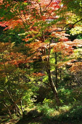 日光 田母沢御用邸記念公園の庭園1_a0263109_15390974.jpg