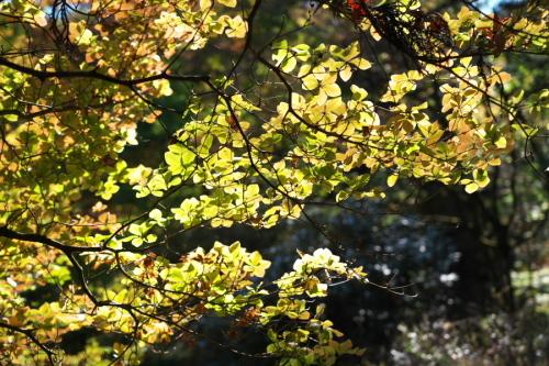 日光 田母沢御用邸記念公園の庭園1_a0263109_15390983.jpg