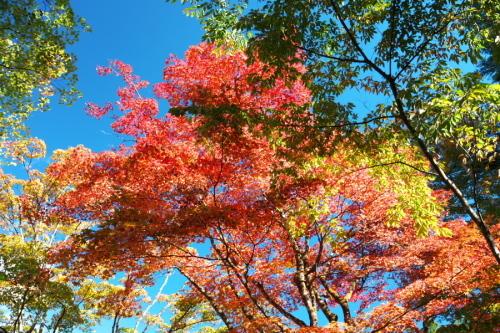 日光 田母沢御用邸記念公園の庭園1_a0263109_15391028.jpg