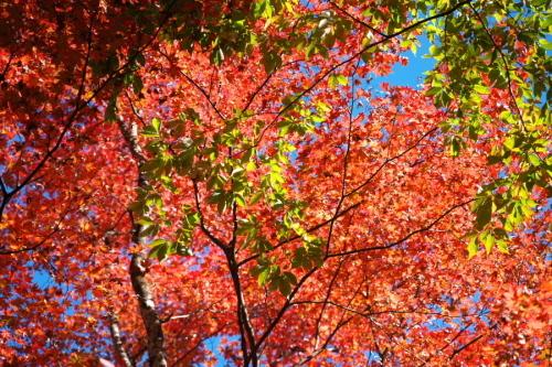 日光 田母沢御用邸記念公園の庭園1_a0263109_15393280.jpg