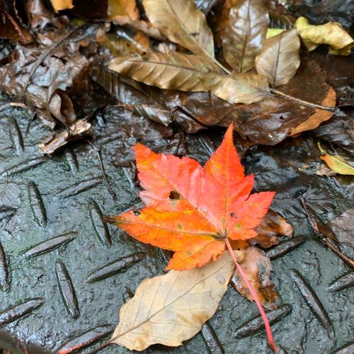 秋を見つけに…🍁_c0227612_15442349.jpg