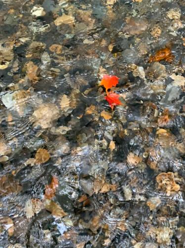 秋を見つけに…🍁_c0227612_15444653.jpg