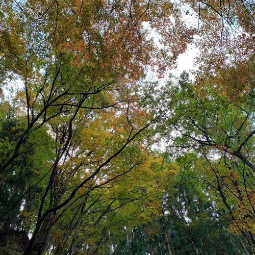秋を見つけに…🍁_c0227612_15492507.jpg