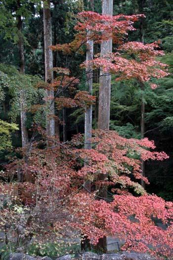 紅葉が始まった 阿弥陀寺_e0048413_19131675.jpg