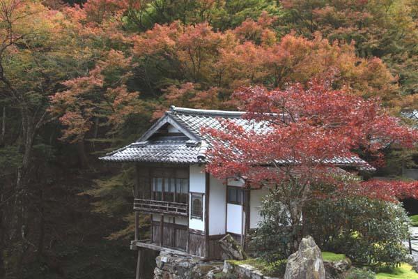 紅葉が始まった 阿弥陀寺_e0048413_19134963.jpg