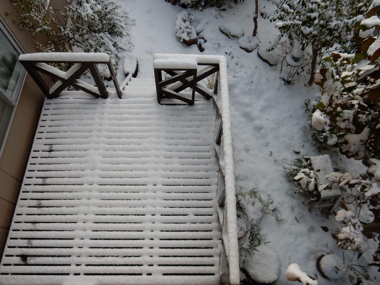 いきなり真冬に(+ ルイス・キャロルの「スナーク狩り」)_c0025115_21395533.jpg