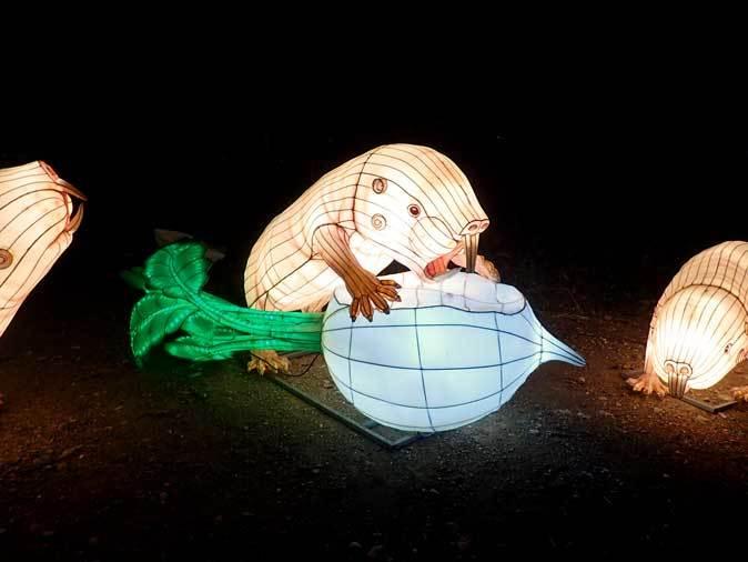 埼玉県こども動物自然公園ナイトズー2019③~闇に遊ぶコツメカワウソたち_b0355317_14200948.jpg