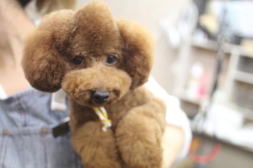 11月10日ご来店のワンちゃんです!!_b0130018_09400427.jpg