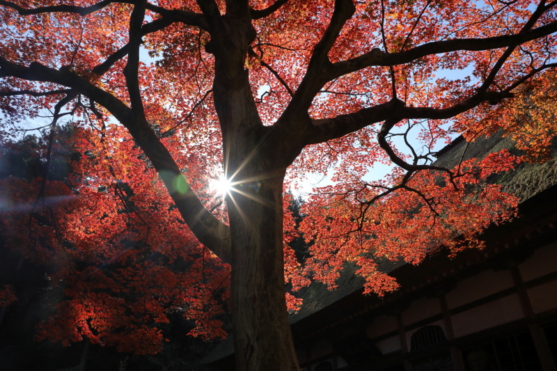 禅寺の紅葉_e0169421_22274835.jpg