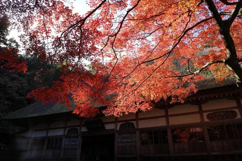 禅寺の紅葉_e0169421_22274978.jpg