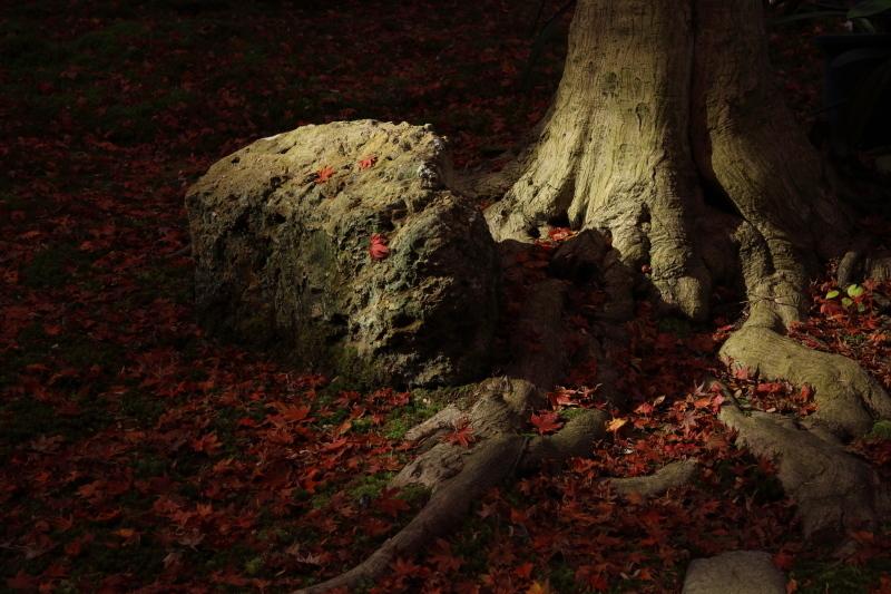 禅寺の紅葉_e0169421_22275070.jpg