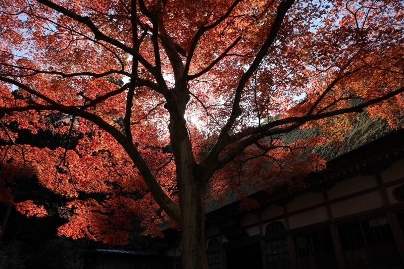 禅寺の紅葉_e0169421_22275149.jpg