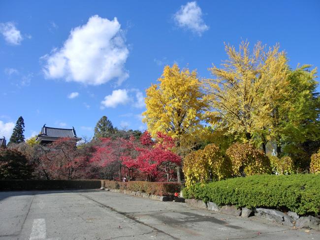 上田城跡公園の紅葉_d0066822_16174923.jpg