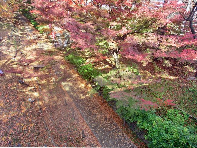 上田城跡公園の紅葉_d0066822_16175942.jpg
