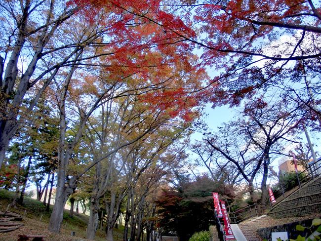 上田城跡公園の紅葉_d0066822_16180568.jpg