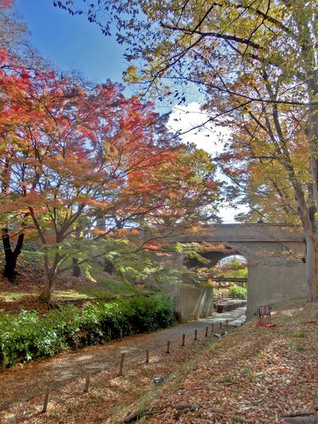 上田城跡公園の紅葉_d0066822_16181182.jpg