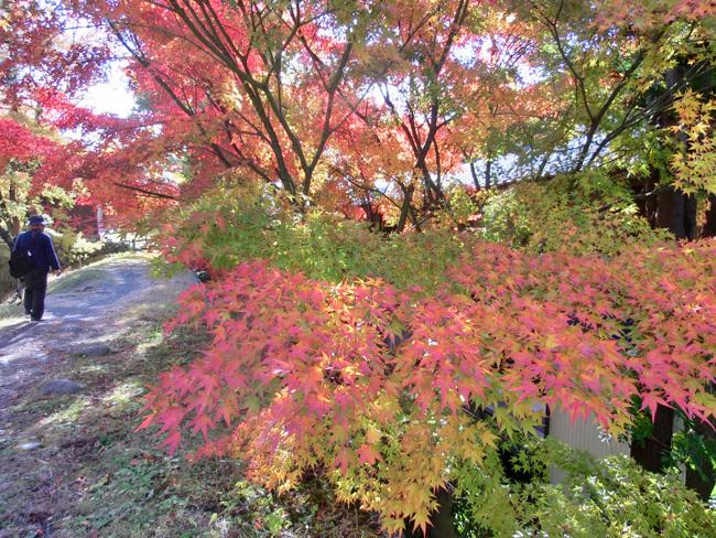 上田城跡公園の紅葉_d0066822_16181996.jpg