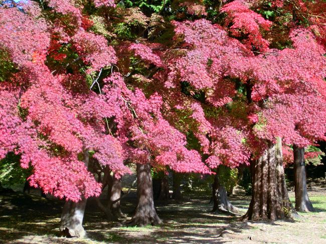 上田城跡公園の紅葉_d0066822_16182415.jpg