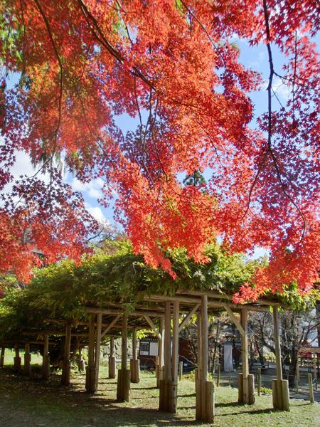 上田城跡公園の紅葉_d0066822_16182998.jpg