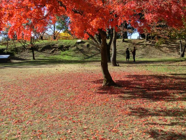 上田城跡公園の紅葉_d0066822_16183761.jpg