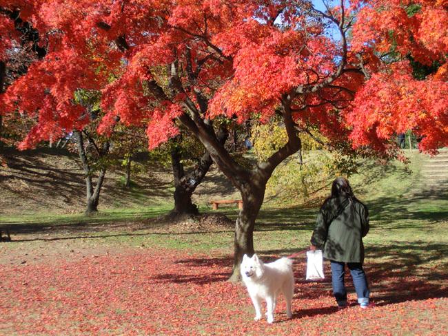 上田城跡公園の紅葉_d0066822_16184798.jpg