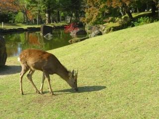 奈良を楽しむ・・3_e0030924_13541382.jpg