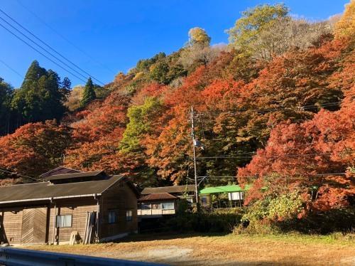 今年も紅葉が綺麗になってきました!_e0154524_10381317.jpg
