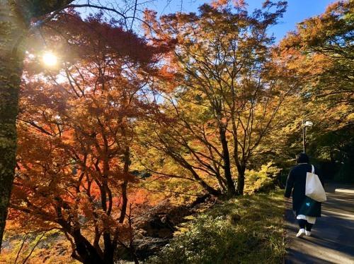 今年も紅葉が綺麗になってきました!_e0154524_10381351.jpg