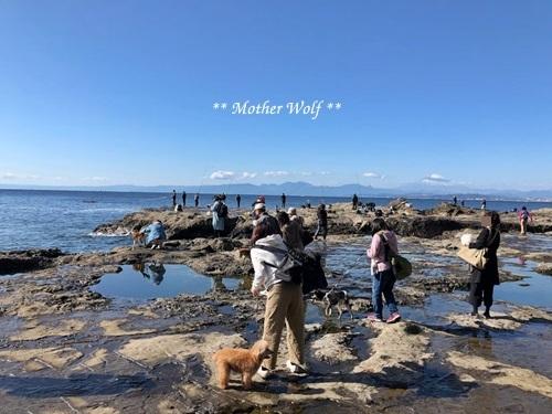 マザーウルフ遠足、江の島へ行って来ました~♪_e0191026_19573167.jpg