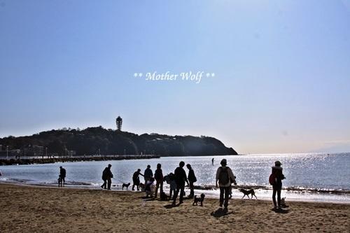 マザーウルフ遠足、江の島へ行って来ました~♪_e0191026_20080822.jpg