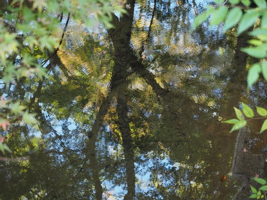 森林浴_a0332935_23482123.jpg
