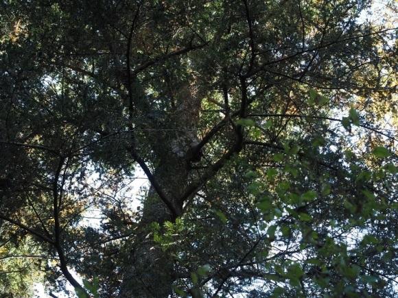 森林浴_a0332935_23482668.jpg