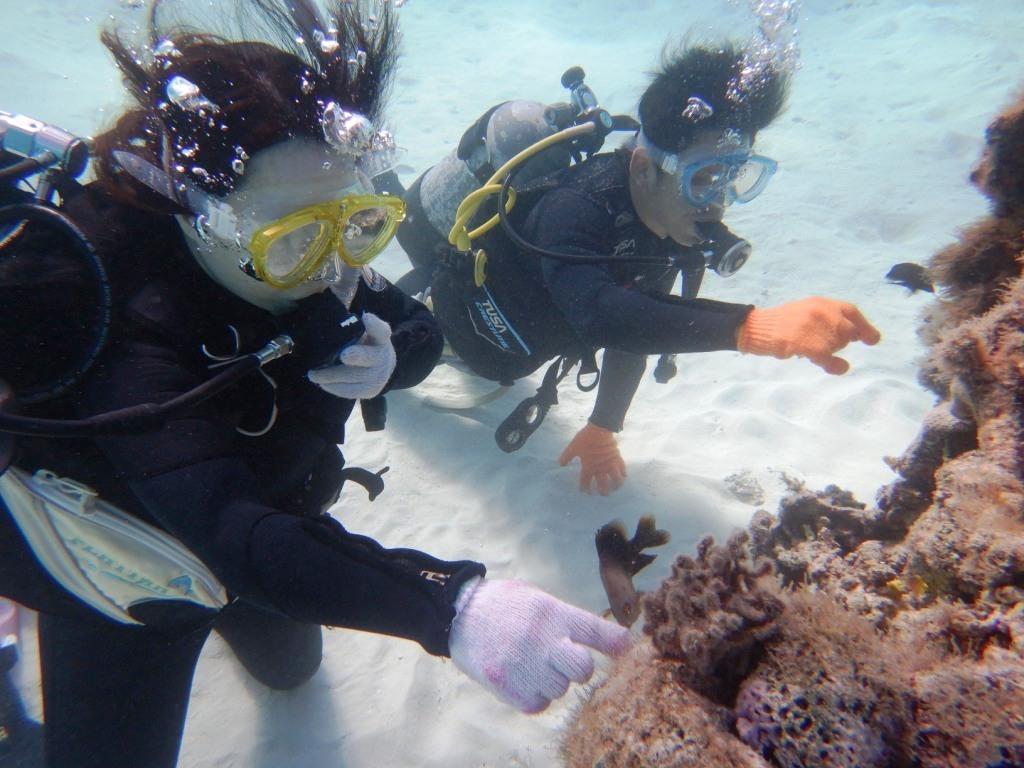 最高にキレイな海で体験ダイビング☆_a0189838_13492313.jpg