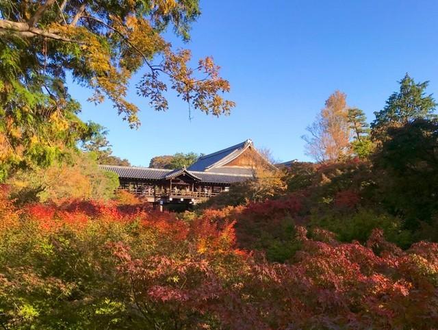 京都の紅葉情報_d0020139_23154880.jpeg