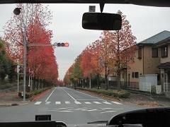 ナーサリィ無料体験のお知らせ 11月15日_e0166344_14245801.jpg