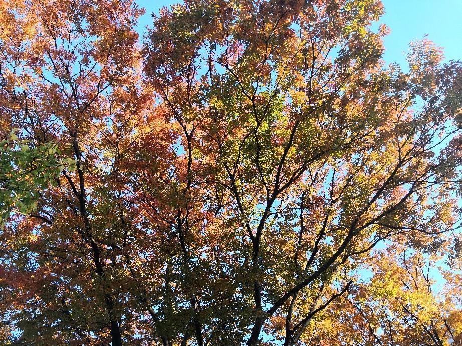 綺麗な紅葉@近松公園付近_a0004752_19304379.jpg