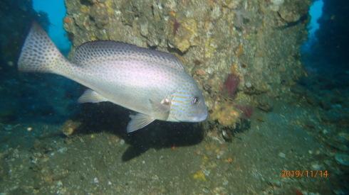 1115    第28回、人工魚礁研究会_b0075059_21401346.jpg
