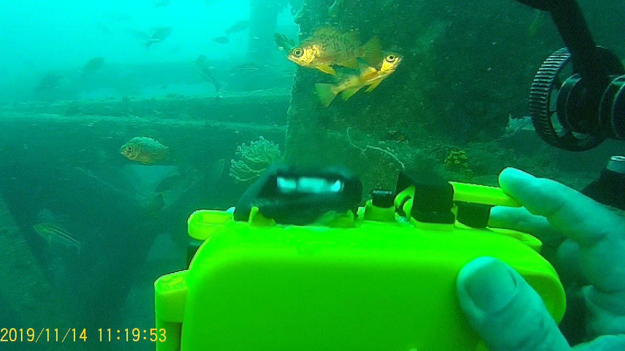 1115    第28回、人工魚礁研究会_b0075059_21522833.jpg