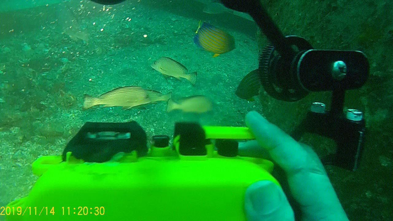 1115    第28回、人工魚礁研究会_b0075059_21530382.jpg