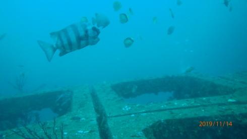 1115    第28回、人工魚礁研究会_b0075059_23051131.jpg