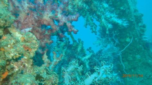 1115    第28回、人工魚礁研究会_b0075059_23063954.jpg