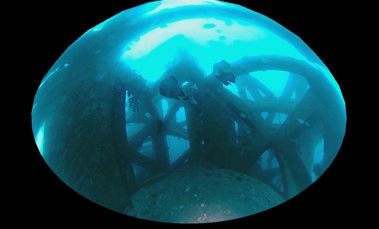 1115    第28回、人工魚礁研究会_b0075059_23153580.jpg