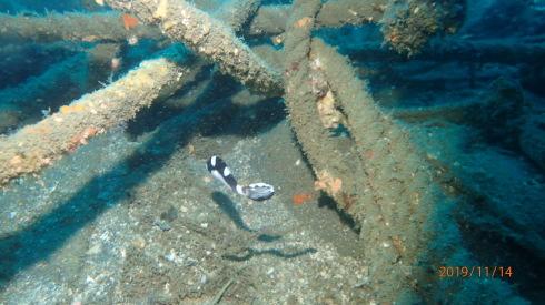 1115    第28回、人工魚礁研究会_b0075059_23165259.jpg