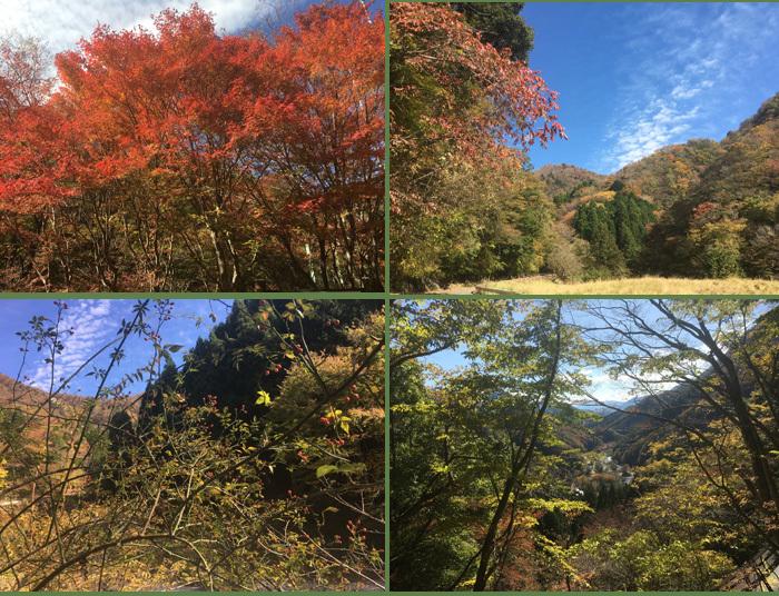 紅葉が綺麗でちた!_c0110361_15285467.jpg