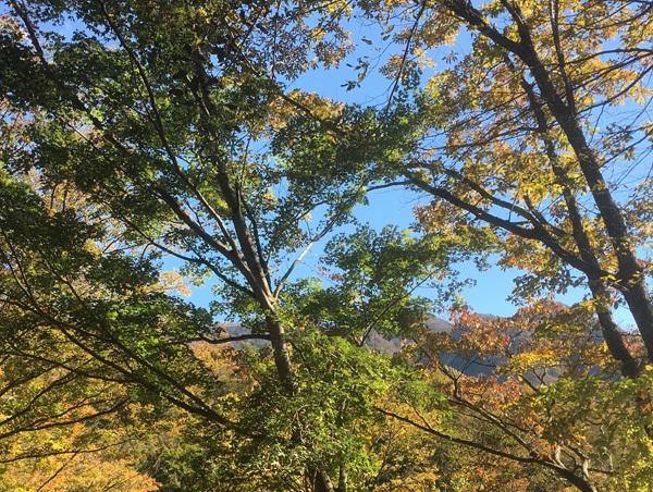 紅葉が綺麗でちた!_c0110361_15314589.jpg