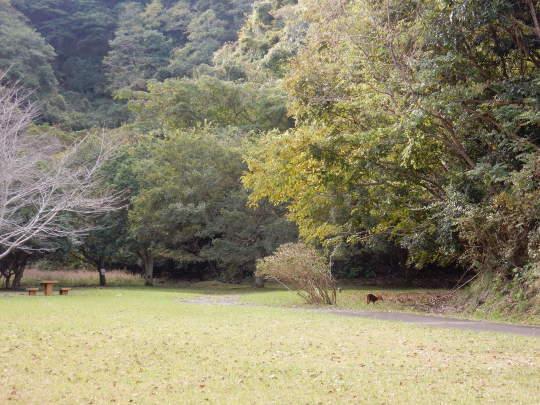 '19,11,15(金)キョンと公園散歩と小雪ちゃん!_f0060461_10231416.jpg